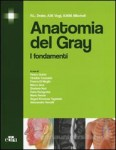 Anatomia e Gray-t
